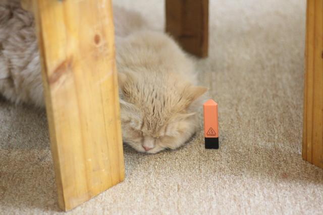 Mèo Be - Góc của Rư
