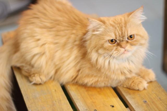mèo bư - lớp học trang điểm cá nhân